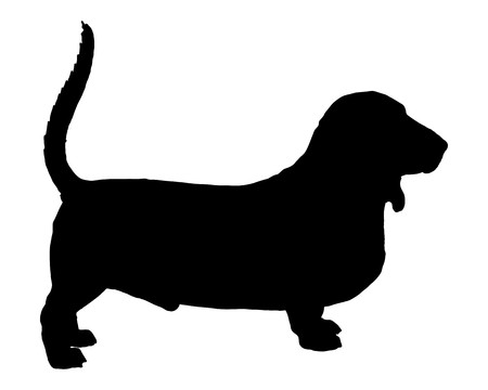 Basset Hound Stock Photo - 7020482