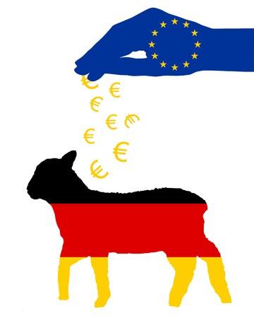 German lamb and european subsidies photo