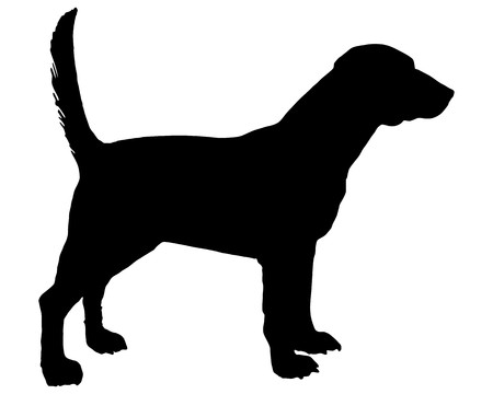 black dog: Beagle
