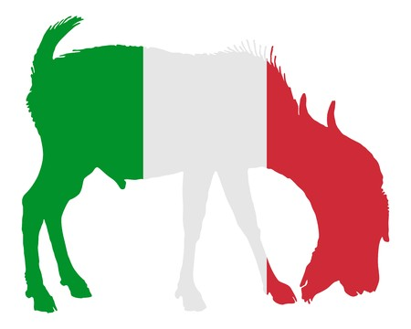 billy: Italian he-goat Stock Photo