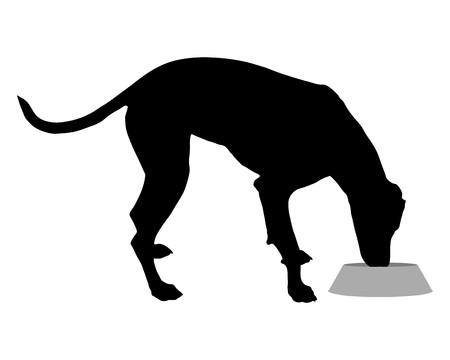 Dog with feeding dish  photo