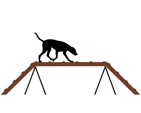 dog agility: Dog training Stock Photo