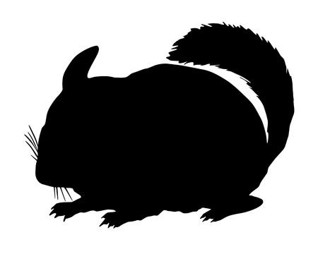 chinchilla: Chinchilla Silhouette