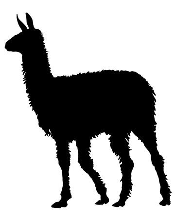 the lama: Lama Silhouette Stock Photo
