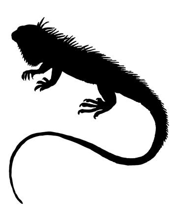 Iguana silhouette  Archivio Fotografico - 8618562