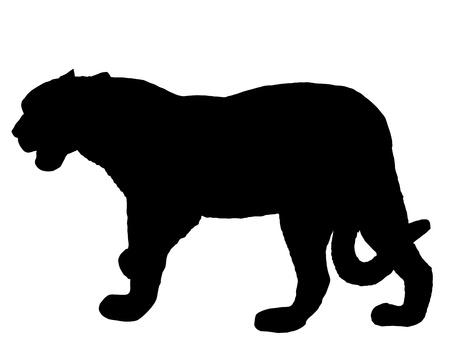 Jaguar silhouette photo