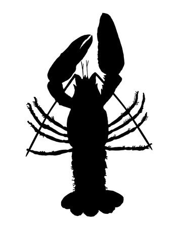 Crawfish silhouette photo