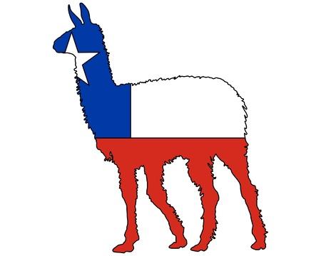 the lama: Lama Chile Stock Photo