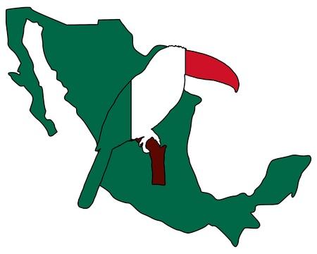 Toucan Mexico photo