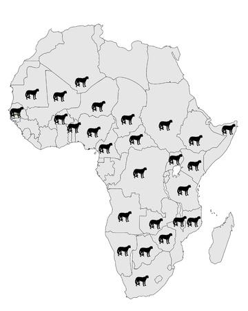 acinonyx jubatus: Cheetah distribution Africa