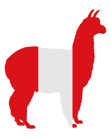 Peruvian alpaca photo
