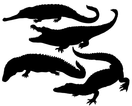 Reptile Silhouette photo
