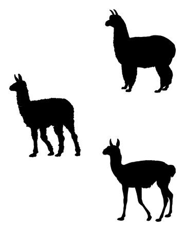 Guanaco Lama, Alpaca, Stockfoto