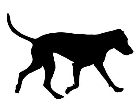 犬の訓練 写真素材