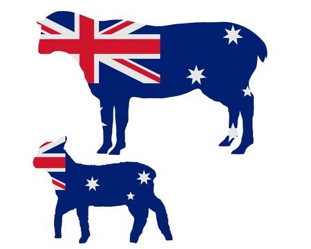 sheeps: Australian sheeps
