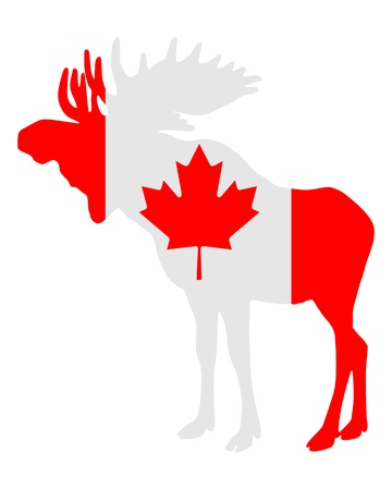 Mosse in flag of canada photo