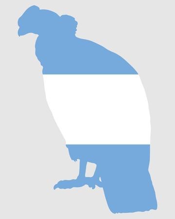 condor: Andean Condor Argentina