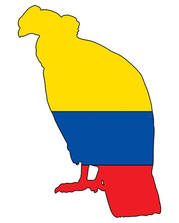 andean condor: Andean Condor Ecuador