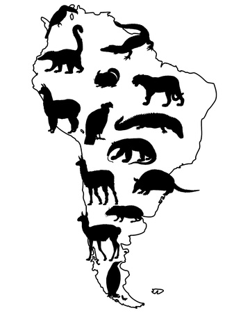 alpaca: Animals South America Illustration