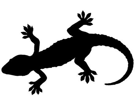 Silhouette Gecko Archivio Fotografico - 9077585