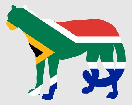 acinonyx jubatus: Cheetah South Africa