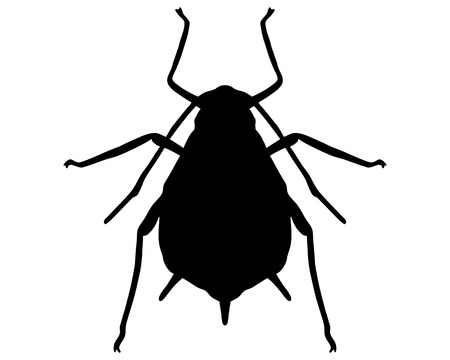 lice: Aphid Silhouette