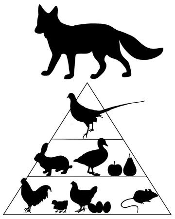 piramide alimenticia: Pir�mide de alimentos de Fox Vectores