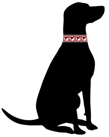 flea: Perro con collar de pulgas