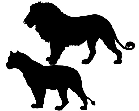 male animal: Lions silhouette