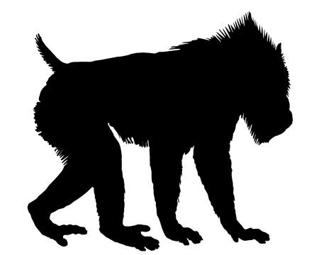 sfinx: Mandril silhouet Stock Illustratie