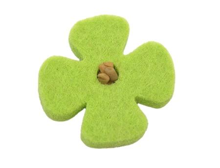 fenugreek: Sprouting fenugreek