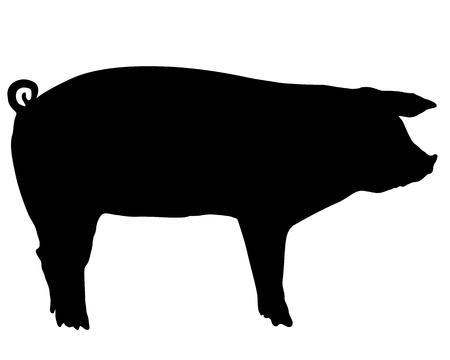 cerdos: Silueta de cerdo Vectores