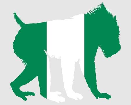 mandrill: Mandrillo Nigeria