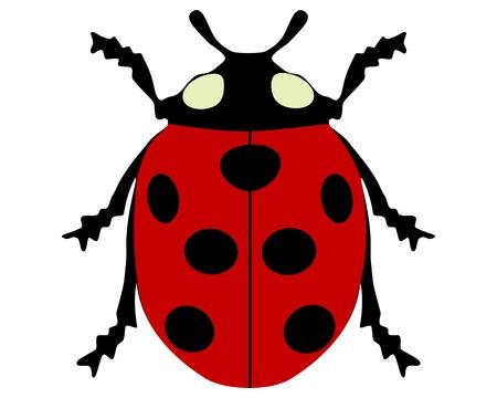 coccinellidae: Ladybird isolated Illustration