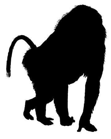 mandril: Silueta de babuino Vectores