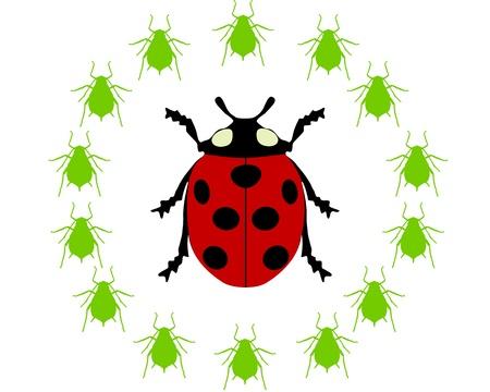 Ladybird diet Stock Vector - 9287358