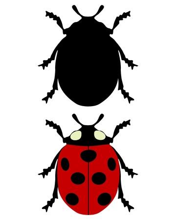 coccinellidae: Ladybird silhouette