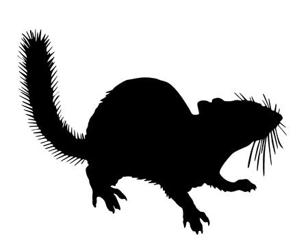 chipmunk: Chipmunk silhouette
