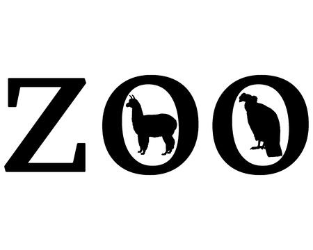 andean condor: Zoo animals