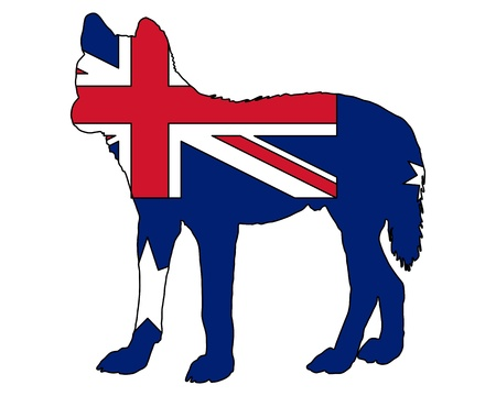 dingo: Australian Dingo Illustration