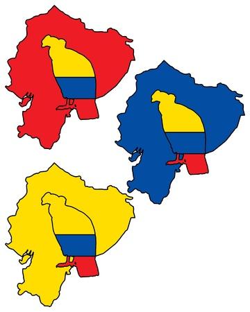 condor: Andean Condor Ecuador