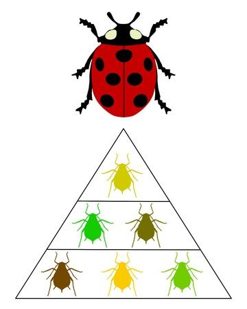 coccinellidae: Ladybird diet pyramid Illustration