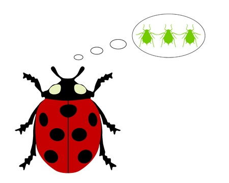coccinellidae: Ladybird diet