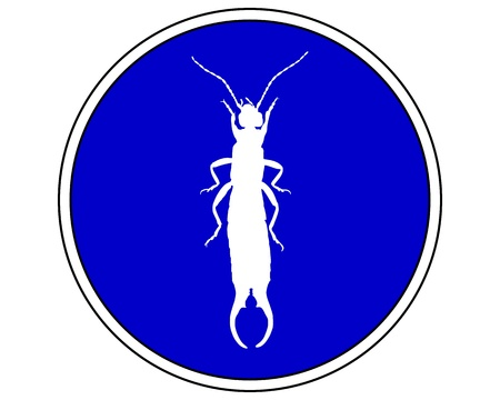 permitted: Earwig allowed  Illustration