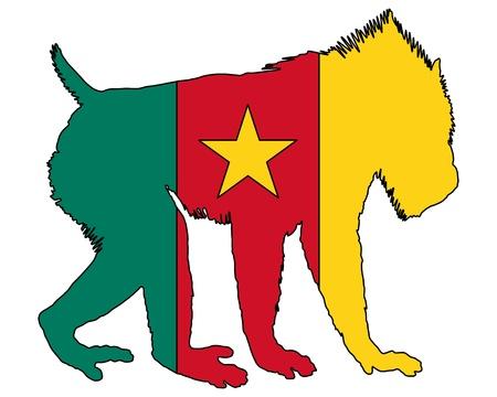 mandrill: Mandrillo Camerun