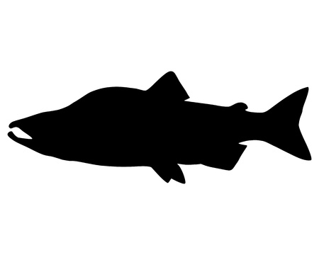 Salmon Silhouette Illustration
