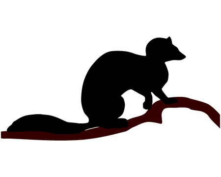 marten: European Pine Marten silhouette Illustration