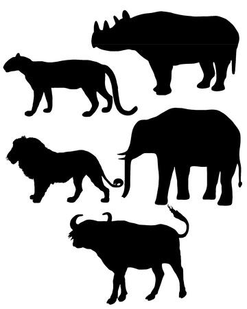 panthera: Cinque grandi