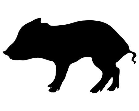 Young wild boar Vector