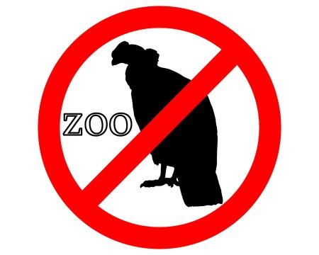 andean condor: Condor in zoo prohibited